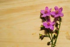 Fiori su legno Fotografia Stock