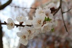 Fiori su un albero immagine stock