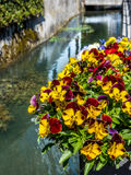 Fiori su un canale di fiume in Svizzera Immagine Stock Libera da Diritti