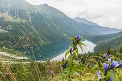 Fiori su un fondo del lago nella valle Fotografie Stock