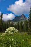 Fiori su un prato in montagne di Sayan Fotografia Stock