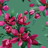 Fiori su un ramo sbocciante in primavera Immagini Stock Libere da Diritti
