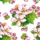 Fiori su un ramo sbocciante in primavera Immagine Stock Libera da Diritti