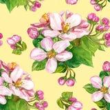 Fiori su un ramo sbocciante in primavera Fotografie Stock Libere da Diritti