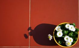 Fiori su un terrazzo Immagini Stock