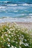 Fiori su una spiaggia mediterranea Fotografie Stock