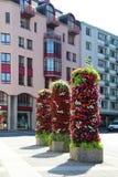 Fiori su una via in Lucerna, Svizzera Fotografia Stock