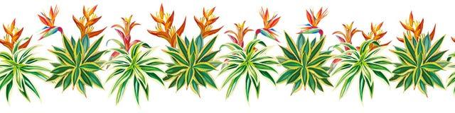 Fiori succulenti delle piante tropicali del nastro del cactus senza cuciture Immagine Stock
