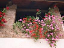 Fiori sul balcone Fotografie Stock Libere da Diritti