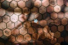 Fiori sul pavimento del cemento Fotografia Stock