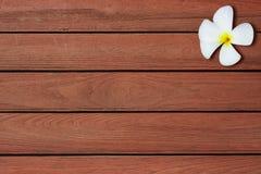Fiori sul pavimento di legno Immagini Stock Libere da Diritti