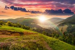 Fiori sul prato del pendio di collina con la foresta al tramonto Fotografia Stock Libera da Diritti