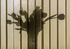 Fiori sul windowsill Fotografie Stock Libere da Diritti