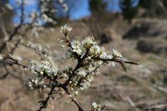 Fiori sull'albero sulla terra fotografie stock