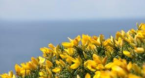 Fiori sulla costa Fotografia Stock Libera da Diritti