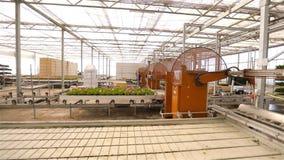 Fiori sulla linea del trasportatore Interiore industriale Fiori variopinti in serra moderna Serra automatizzata moderna archivi video
