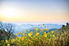 Fiori sulla montagna Immagine Stock