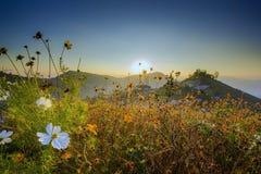 Fiori sulla montagna Tailandia del Nord Immagini Stock