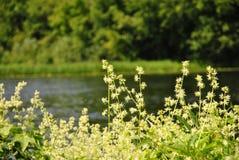 Fiori sulla sponda del fiume Fotografie Stock