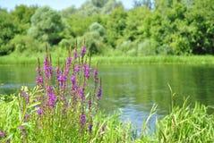 Fiori sulla sponda del fiume Immagine Stock