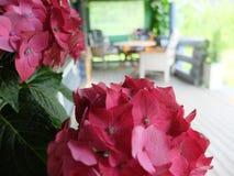 Fiori sulla veranda fotografia stock libera da diritti