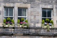 Fiori sulle finestre Immagine Stock Libera da Diritti