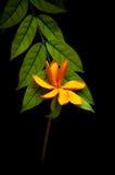 Fiori sulle foglie Immagini Stock