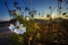 Fiori sulle montagne di mattina Immagini Stock Libere da Diritti