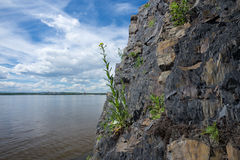 Fiori sulle rocce Fotografia Stock