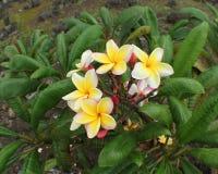Fiori tropicali Immagini Stock Libere da Diritti
