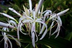 Fiori tropicali immagine stock