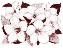 Fiori tropicali Arti grafiche Composizione decorativa - fiori su un fondo dell'acquerello Usi i materiali stampati, i segni, ogge illustrazione di stock