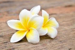 Fiori tropicali del frangipane, fiori di plumeria Fotografia Stock Libera da Diritti