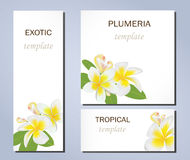 Fiori tropicali della plumeria sui modelli per i biglietti da visita ed altre presentazioni royalty illustrazione gratis
