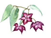 Fiori tropicali di fioritura dell'acquerello Fotografia Stock Libera da Diritti