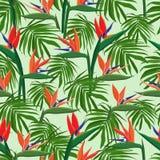 Fiori tropicali esotici raccolta di strelizia royalty illustrazione gratis