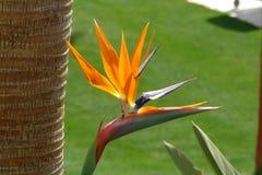 Fiori tropicali graziosi Tiro reale fotografia stock libera da diritti