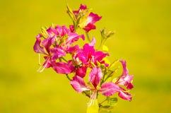 Fiori tropicali rosa su fondo giallo fotografia stock