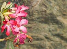 Fiori tropicali rosa su fondo vago Fotografia Stock