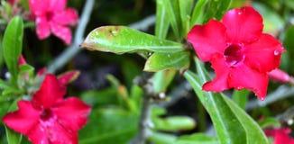 Fiori tropicali in uno spazio del giardino fotografia stock libera da diritti