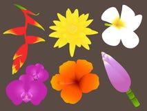 Fiori tropicali variopinti messi Immagini Stock Libere da Diritti