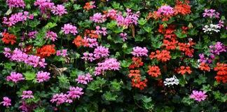 Fiori in un giardino fotografia stock
