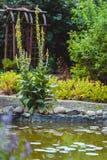 Fiori in un giardino botanico Immagine Stock
