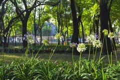 Fiori in un parco con gli alberi nei precedenti fotografia stock libera da diritti