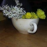 Fiori in un teacup Fotografia Stock Libera da Diritti