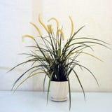 Fiori in un vaso bianco fotografia stock