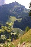 Fiori in una valle verde nelle dolomia italiane Immagine Stock Libera da Diritti