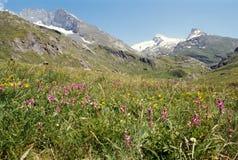 Fiori in valle di Aveyrolle e montagne nevicate. Savoia. La Francia Immagine Stock Libera da Diritti