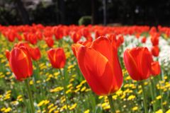 Fiori variopinti ad un giardino giapponese a Beppu, Oita immagine stock