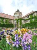 Fiori variopinti davanti all'istituto botanico del giardino botanico di Monaco di Baviera Fotografia Stock